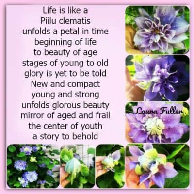 photos of the piilu clematis and how the cycle of life is depicted in a poem