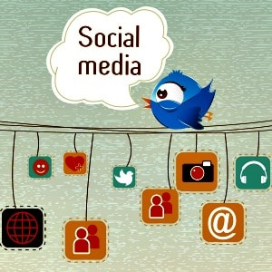 social media bird on a wire