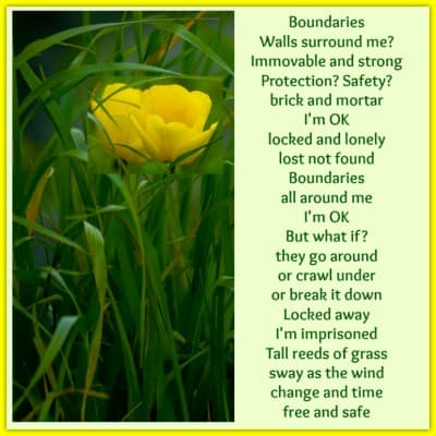 poem boundaries with grass and a yellow flower400