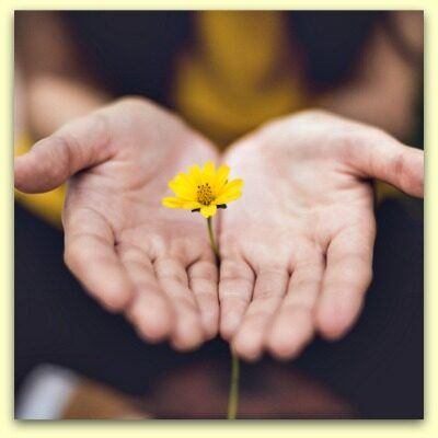 hands held out with a daisy