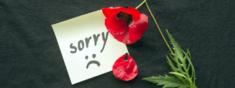 word sorry with red poppy