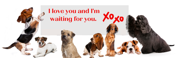 dogs saying i am waiting for you