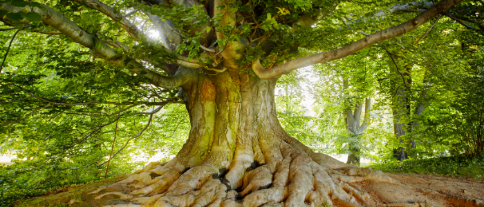 Poems To Inspire Growth, Laura Fuller old tree