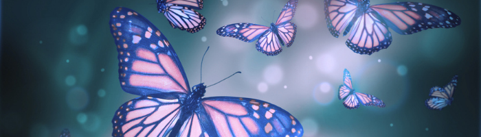 Why Is Change Important butterfies